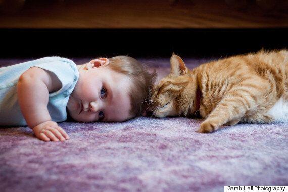 고양이는 악마가 아니다 : 고양이에 대한 잘못된 속설