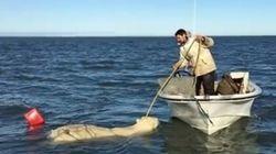고래 사냥꾼이 그물에 걸린 북극곰을