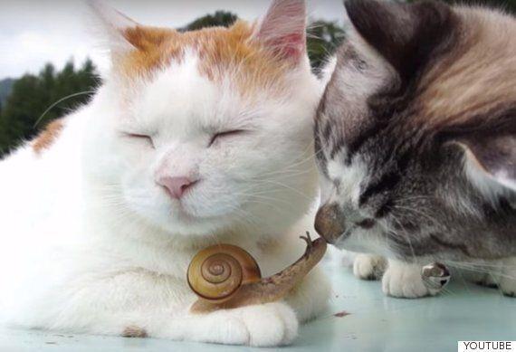 고양이들은 달팽이와 친구가 되고 싶은