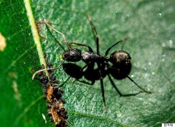 도심 속 '개미 제국' 발견...1000만 마리 한가족