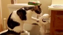 고양이 VS 휴지 : 전쟁이다!(동영상