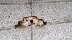 이 개는 당신에게 인사를 하고 싶다(사진
