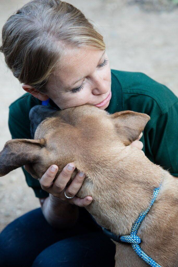 국제 동물보호단체의 노력으로 식용견 160마리가 미국으로