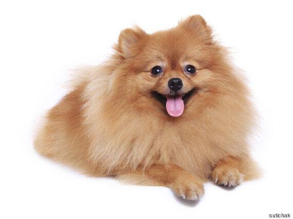 반려동물 사육이 금지된 아파트에서 투병 중인 환자를 위해 낮 시간에 개가 방문했다면 계약
