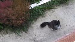 이것은 고양이 전용