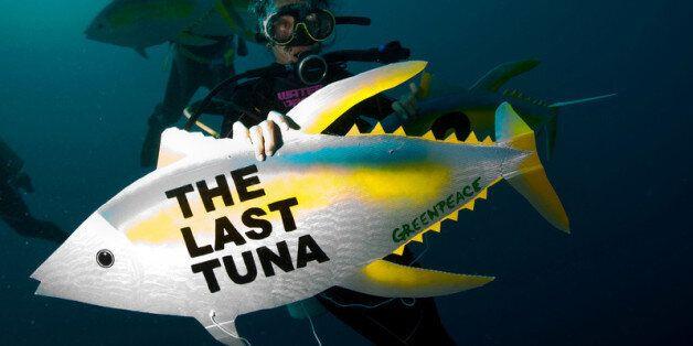 지난 40년간 바다 동물 개체수는 절반으로