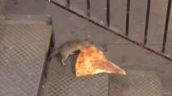 뉴욕 지하철의 쥐가 피자를 물고 고된 퇴근길을