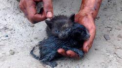 기름 더미에서 죽어가던 새끼 고양이들을 구해낸 훌륭한
