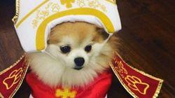 프란치스코 교황을 사랑하는 개들의