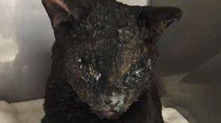 캘리포니아 산불에서 가까스로 살아남은 고양이, '희망'의 상징이