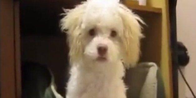 이 강아지는 목격자를 없애야겠다고