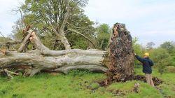쓰러진 나무 밑에서 1000년 전 유골이
