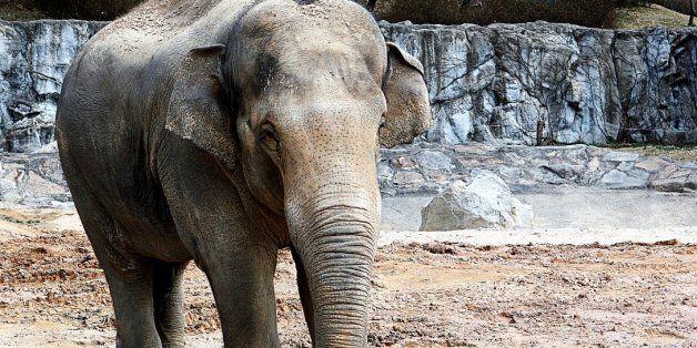 양반 죽이고 섬으로 유배된 코끼리의