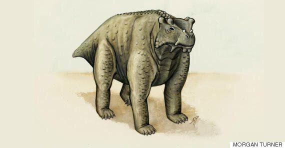 지구 역사상 최초로 네 발로 섰던 혹부리 동물 '부노스테고스 아코카넨시스'가