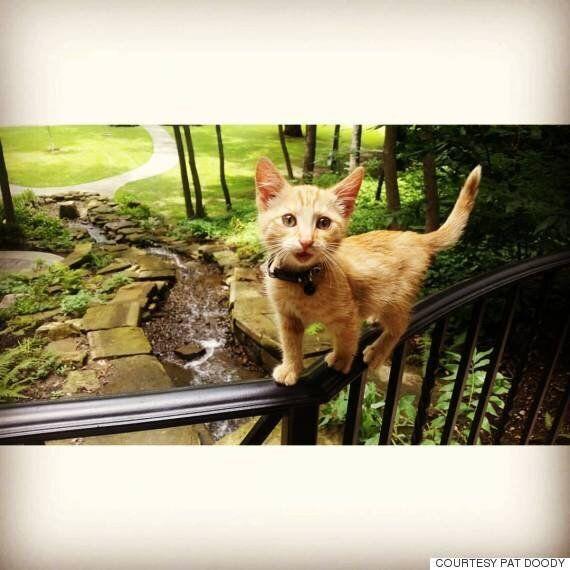 바이커들과 고양이가 함께 미국을 횡단하게 된