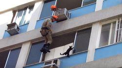 6층 높이 건물에서 고양이 구출을
