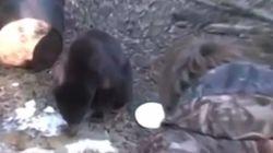 9살 아들 생일에 곰사냥을 시킨