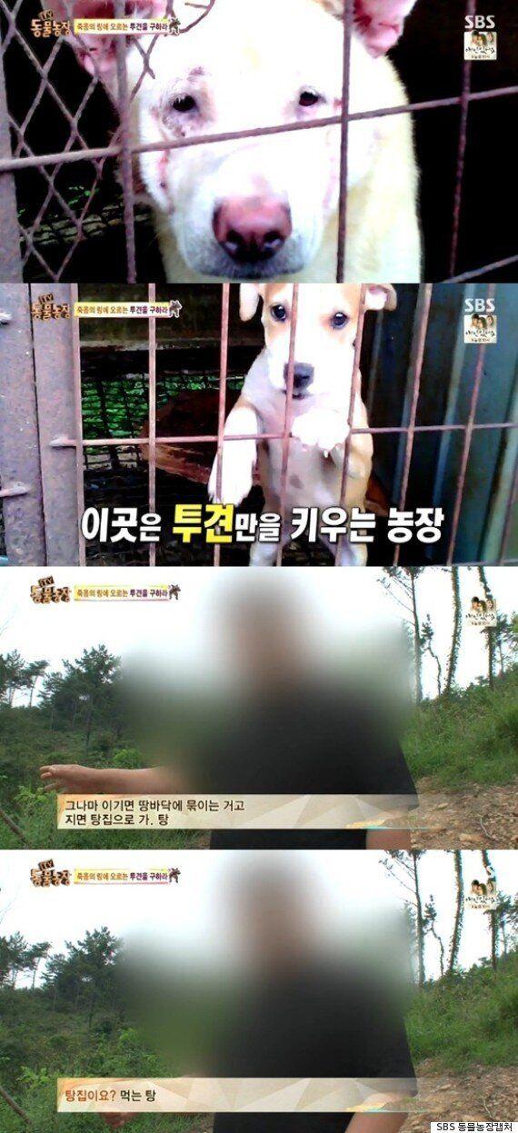 아나운서 장예원이 다시 봐 달라고 호소한 '투견장'의 참혹한