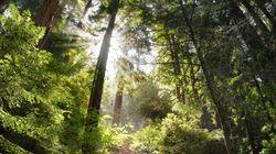 전 세계 나무의 수는 3조