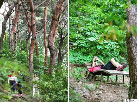 서울 여행자가 꼭 가봐야 할 남산 산책길