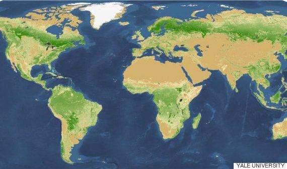 지구에는 생각보다 훨씬 많은 나무가