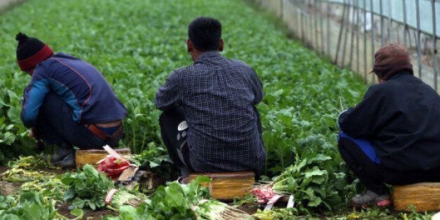 한국, 내국인-외국인 임금 격차