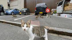 히로시마 관광과가 개발한 고양이 스트리트
