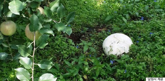 전북 남원에서 발견된 지름 20cm짜리