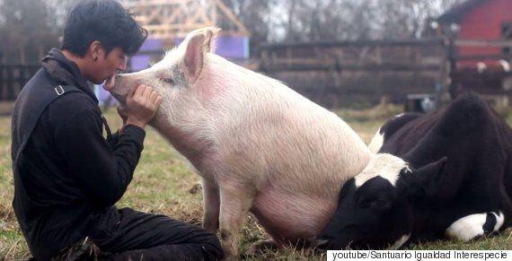 애교 부리는 개·소·돼지·고양이를 한 번에