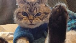 보호센터에 구조된 뱀파이어 고양이