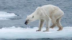 지구 온난화의 심각성을 보여주는 충격적인 한 장의