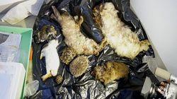 동물원 쓰레기통에서 멸종 위기종의 사체가