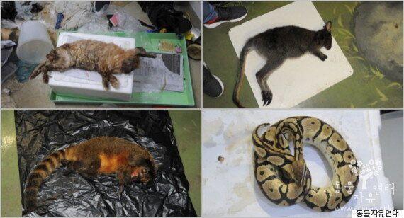 폐업 동물원에서 동물들이 죽어나가고