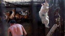 개고기 축제에서 구조된 이 고양이는 어떻게