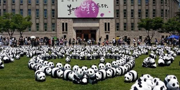 지난 5월 판다들도 다녀간 서울시청 앞