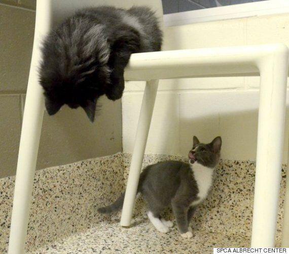 시각 장애 고양이와 도우미 고양이의