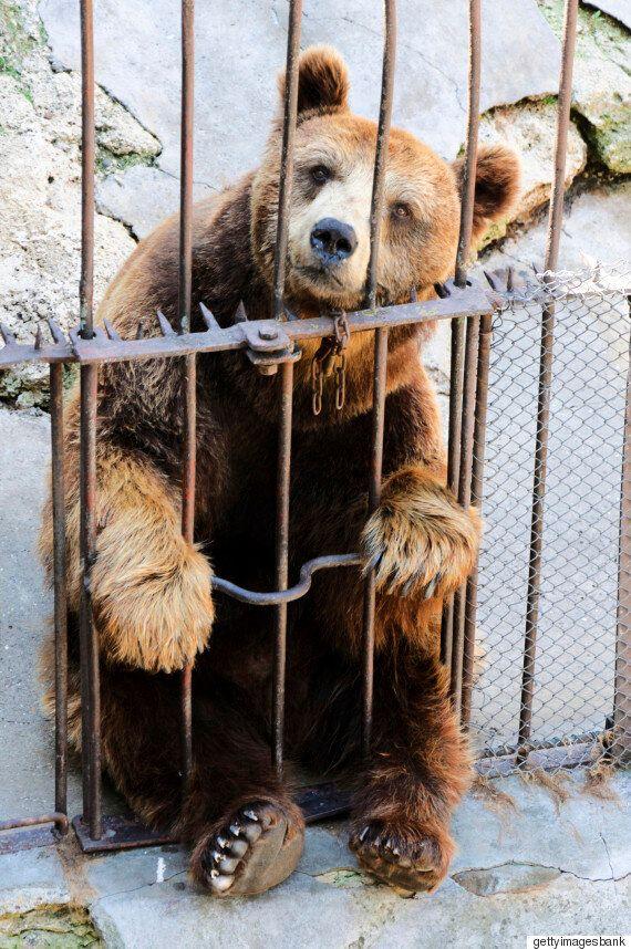 세계 최초로 '동물원'을 없앤 국가가