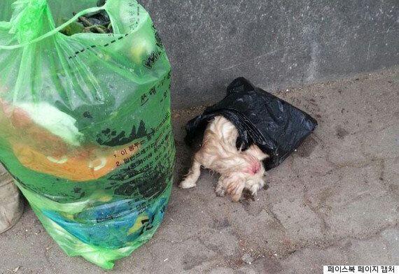 쓰레기봉투에 버려졌던 강아지의 현재
