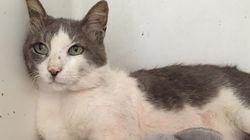 미코노스의 고양이가 우리에게 주는 교훈 : 인간의 연민과 친절은 잔인함을 이길 수