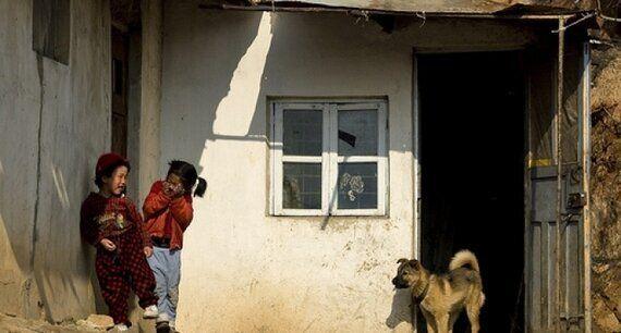 북한에서도 애완동물을 키우는 일이