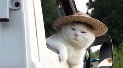여름을 맞은 고양이는 세월이