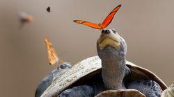 나비는 거북의 눈물을