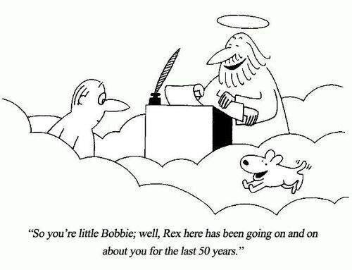 당신이 개고기를 먹지 말아야 할 6가지