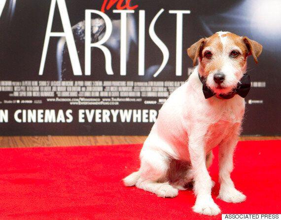 영화 '아티스트'의 동물배우 어기, 세상을