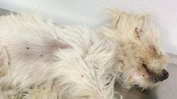 자동차에 치인 강아지를 살린