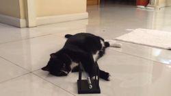 고양이는 물리학을