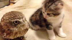 새끼고양이와 올빼미의 우정 뒤에 숨겨진 슬픈