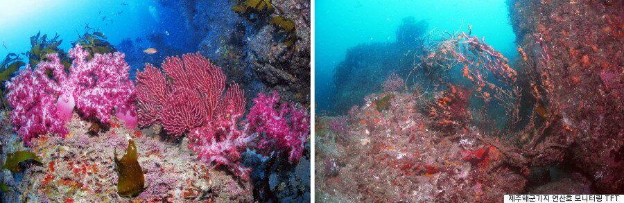 제주도 바다: '해군기지 공사' 전과 후의