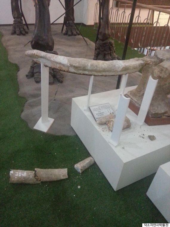 박물관에서 '상아 화석' 파손하고 사라진