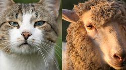 왜 고양이 동공은 수직이고, 양은